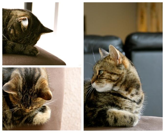Pichinina the cat